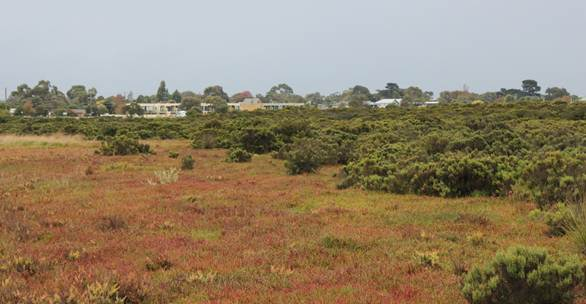 Figure 2.3 Photograph of remnant coastal wetland in Western Port illustrating the potential pressures on habitat from nearby development 