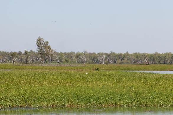 Figure 4.1 Yellow Water Wetlands, with floodplains and melaleuca woodlands in the distance