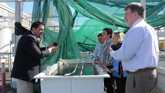 Figure 5.2 Members inspecting Reef HQ's coral propagation program