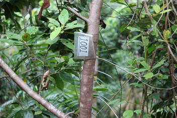 An example of the identification tags placed on trees around the DRO site (right)